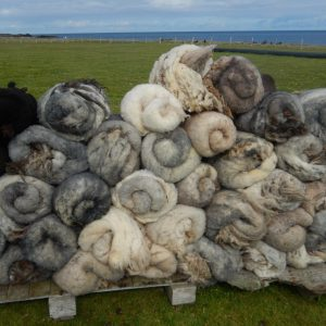 newly clipped fleece pile (blogs )